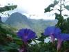 La Réunion 2009